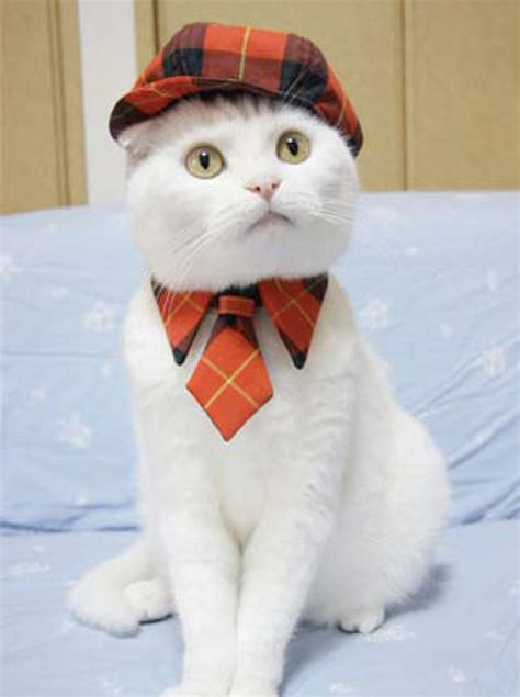 Fashion Cats by Fashion Cats Pets And Docile