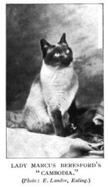 We Are The Cat Excerpt by The Way We Were Excerpts From The 1959 Cfa Yearbook Part 11