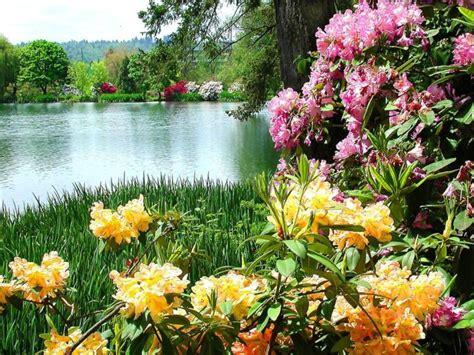 immagini di ci di fiori fiori sul lago 1024x768 jpg