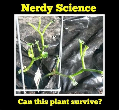 recovering the seed how to live a wholehearted books nerdy science do plants grow without leaves