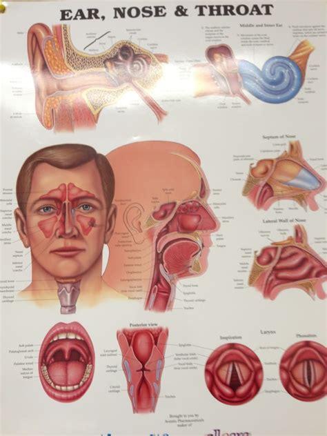 ear nose throat tim mclaughlin do ear nose throat 98 211 pali momi