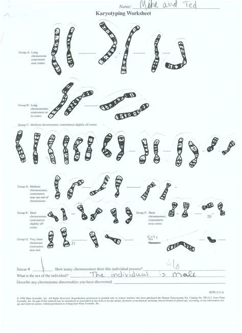 biology karyotype worksheet answers karyotype worksheet photos getadating