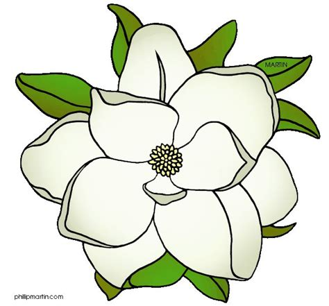 Printable Magnolia Flowers | 19 best art reference magnolia images on pinterest