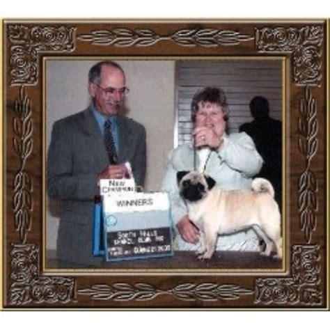 pug breeders pa locust hill pugs pug breeder in smithfield pennsylvania