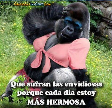 imagenes chistosos monos fotos chistosas de monos google search varios