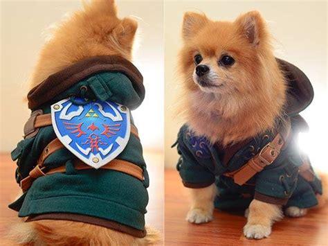 legend  zelda dog costume turns  pet  link