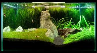 related keywords suggestions for java moss