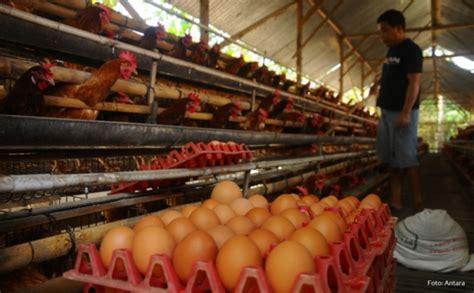 Harga Bungkil Kedelai 2018 7 fakta harga ayam mahal nomor 6 paling ekstrim okezone