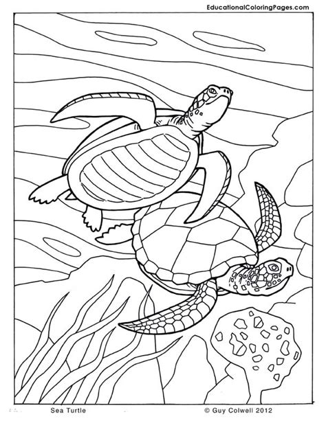 sea turtle coloring page sea and seashore book two 171 animal coloring pages for