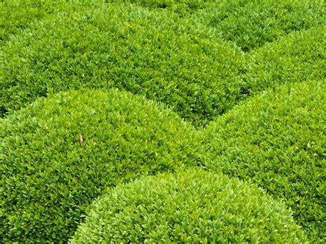 Garten Was Pflanzen Im April by Gartentipps F 252 R Den April Schneiden D 252 Ngen Pflanzen