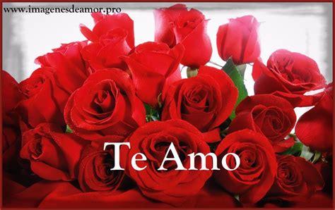 imagenes bonitas rosas rojas muestrario de imagenes de rosas muy bonitas imagenes de rosa