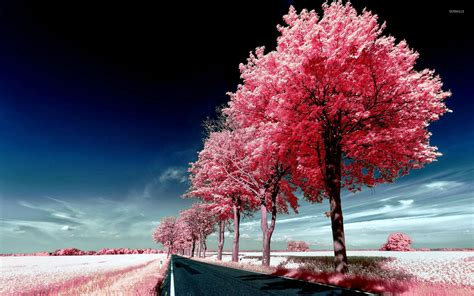 wallpaper pink trees roadside pink trees wallpaper nature wallpapers 29447
