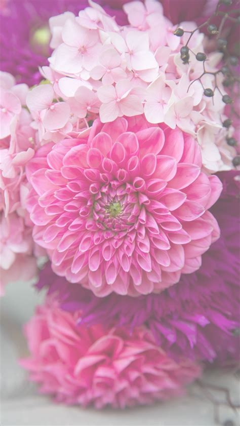 Wallpaper Stiker Motif Colour Pink Flower 1 free floral phone wallpapers summer collection capture