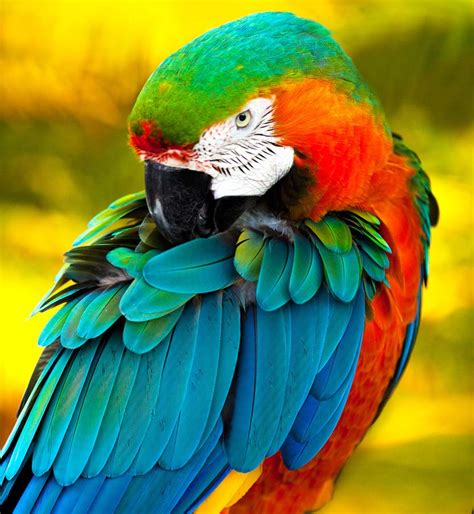 beautiful wallpapers beautiful birds wallpapers