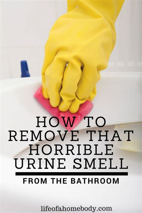 how to remove musty smell from bathroom 25 best ideas about urine smells on pinterest dog urine