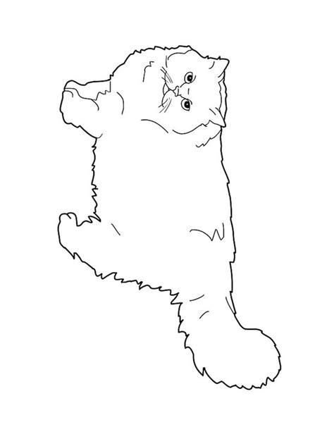 dibujos para pintar gatos gato persa para pintar imagui