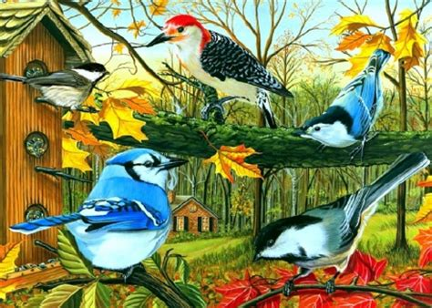 the backyard bird company backyard feeding birds animals background wallpapers