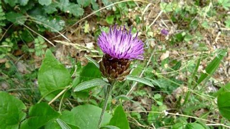 las 10 mejores flores medicinales remedios naturales las mejores plantas medicinales