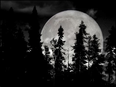black and white moon wallpaper black and white moon 6 background hdblackwallpaper com
