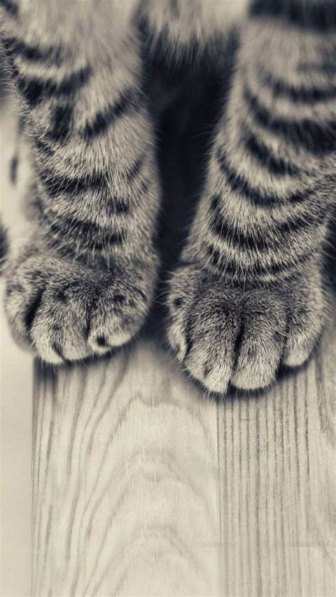 animals iphone   wallpapers striped kitten legs
