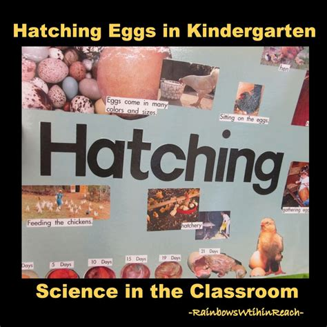 rainbowswithinreach chickens in the classroom craft