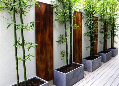 Planting Bamboo In Planters by How To Grow Bamboo In Pots The Garden Of Eaden