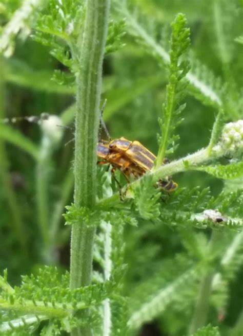 herb garden pest pests and payoffs lafarm the lafayette college