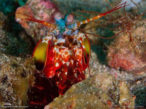 mantis shrimp colors bunter krebs bunte bilder
