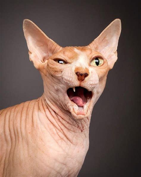 Ugly Cat Meme - ugly cat meme generator