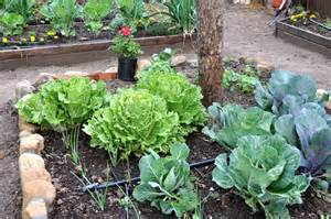 Urban Garden - urban gardening for dummies a good guide for everyone simple sojourns