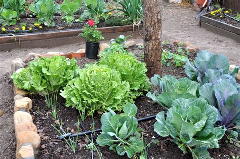 Healthy Urban Kitchen - urban gardening for dummies a good guide for everyone simple sojourns