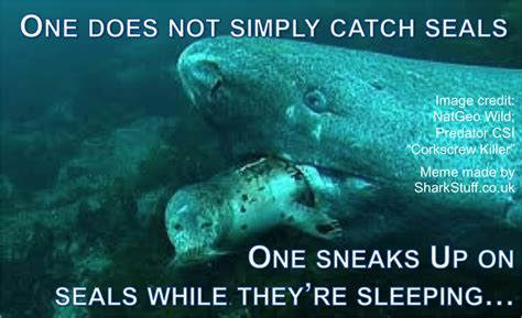 Meme Shark - shark meme monday 3 round up sharkstuff