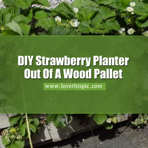 How To Make A Strawberry Planter Out Of A Pallet by Learn How To Make A Strawberry Planter Out Of A Wood Pallet