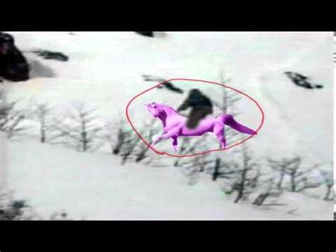 imagenes de unicornios bebes reales imagen perturbadora del unicornio rosa real youtube