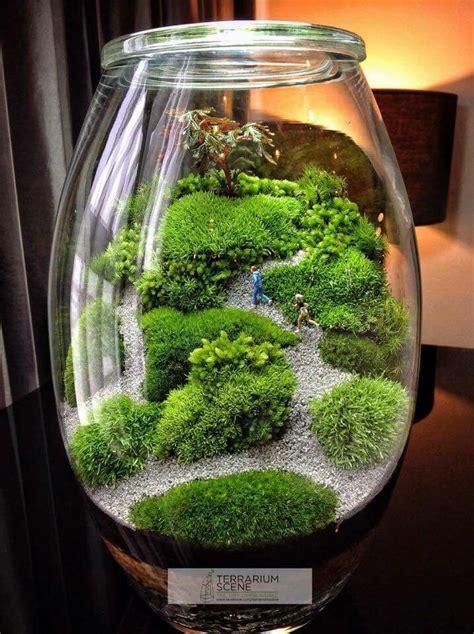 best 25 terrarium plants ideas on pinterest terrarium ideas terrarium and terrarium diy