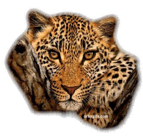 imagenes animadas de amor gif gif animados de jaguar im 225 genes y comentarios para