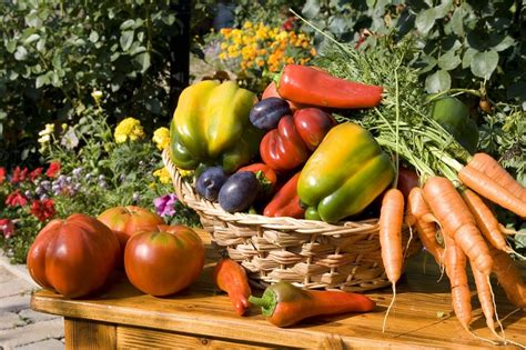 verdure da cucinare italiani quot verdure buone da mangiare ma noiose da cucinare quot