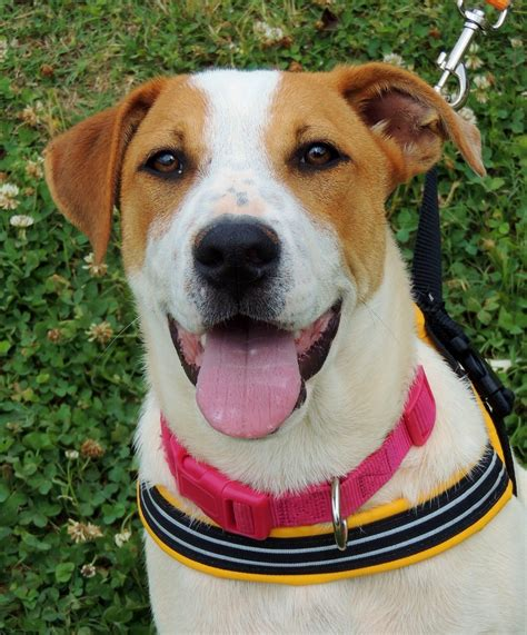 10 28 06 Betty From The Adoptable Pets Photo Pool by Adoptable Dogs And Cats At Petsmart Saturday June 14