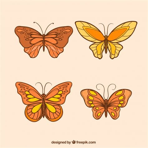 Decorative Butterflies by Decorative Butterflies With Different Designs Vector