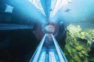 haus des meeres atlantik tunnel im haus des meeres in wien er 246 ffnet