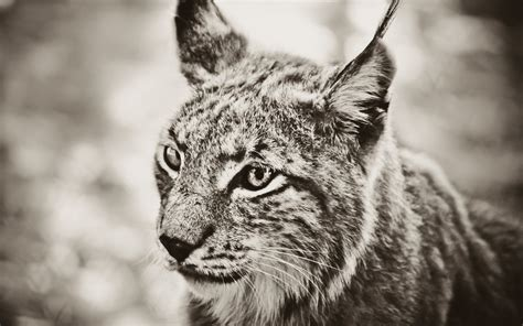 monochrome animals animals monochrome wallpapers hd desktop and mobile