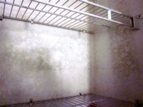 Black Mold In Closet by Epa Mold Remediation Guidelines Safely Removing Mold