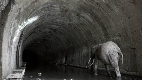 imagenes sensoriales del tunel txuspo poyo honra a los obreros t 250 nel de la enga 241 a