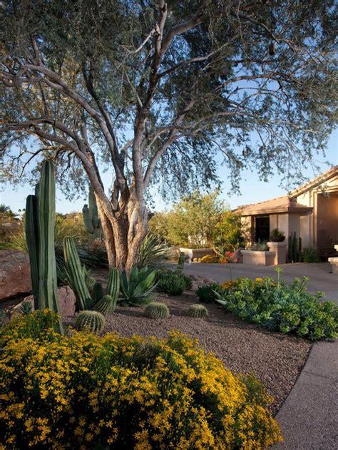 backyard desert landscaping home design ideas pictures