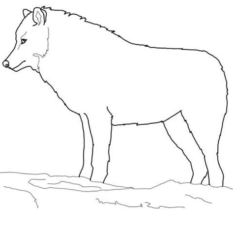 arctic wolf coloring page free printable coloring pages