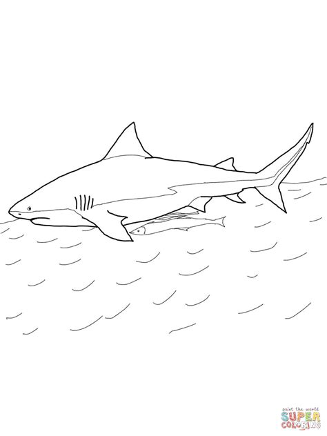 Bull Shark Coloring Pages bull shark coloring page free printable coloring pages