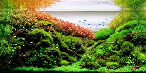Aquascaping Techniques by Top 200 Iaplc The International Aquatic Plants Layout