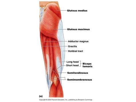 strappo muscolare interno coscia muscoli e sindrome della za d oca dr chetta
