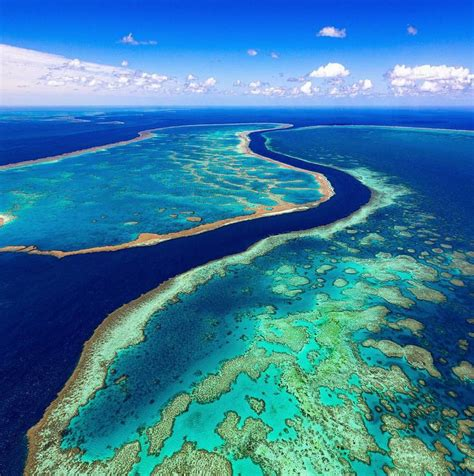 the the great barrier reef of australia its products and potentialities containing an account with copious coloured and photographic illustrations and coral reefs pearl and pearl shell bãªch books best 25 great barrier reef ideas only on