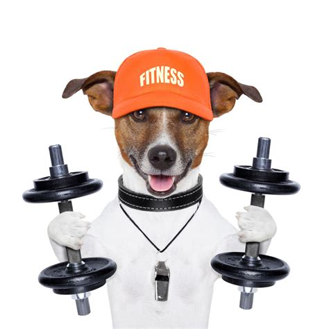 weight loss in dogs dogs your secret weapon for weight loss clinivet